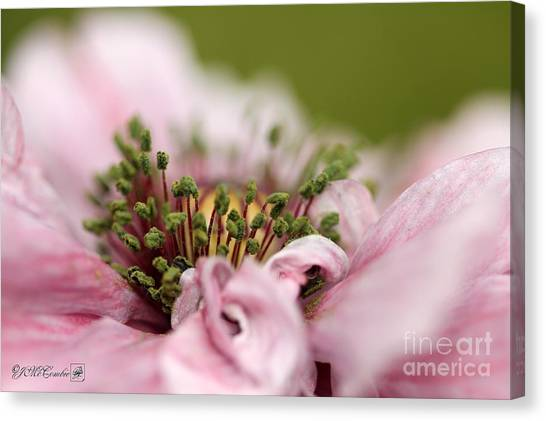 Pretty Pink Poppy Macro Canvas Print - Double Dusty Rose Poppy From The Angel's Choir Mix by J McCombie