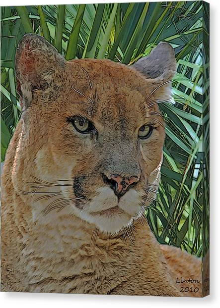 Florida Panthers Canvas Print - Florida Panther by Larry Linton