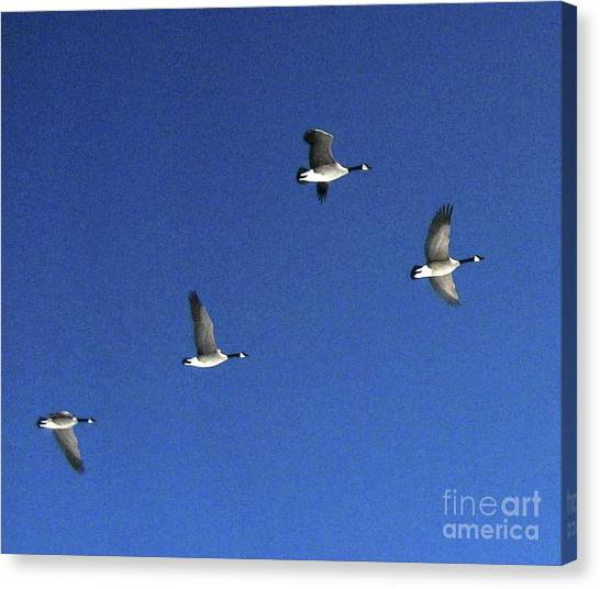 4 Geese In Flight Canvas Print