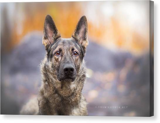 German Shepherds Canvas Print - German Shepherd by Mariel Mcmeeking