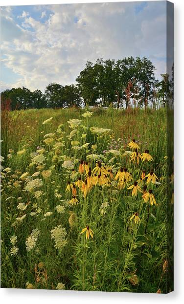 Prairie Sunrises Canvas Print - Glacial Park Wildflowers by Ray Mathis