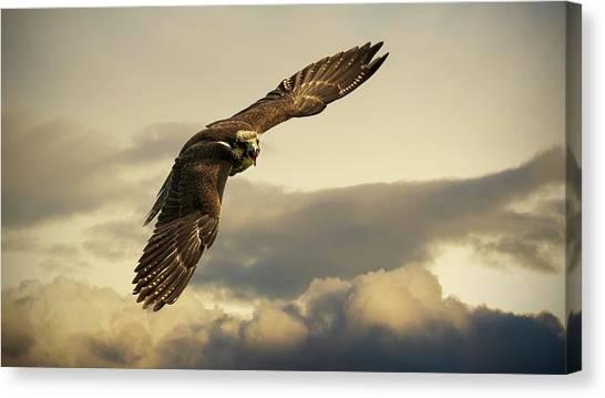 Starlings Canvas Print - Hawk by Mariel Mcmeeking