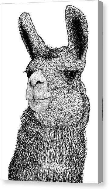 Bolivian Canvas Print - Llama by Karl Addison