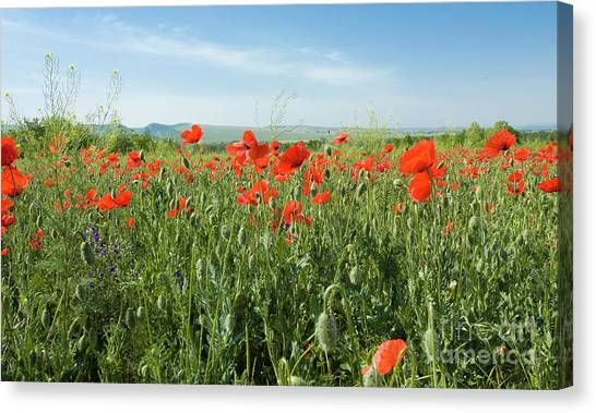 Meadow With Red Poppies Canvas Print