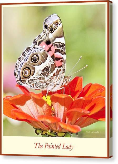 Painted Lady Butterfly On Zinnia Flower Canvas Print
