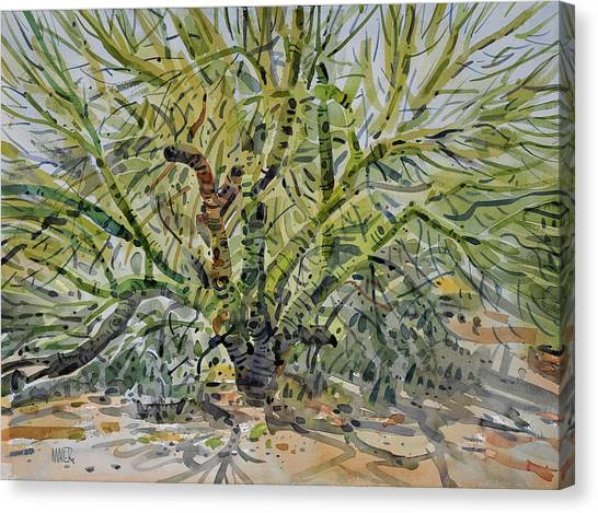 Verde Canvas Print - Palo Verde by Donald Maier