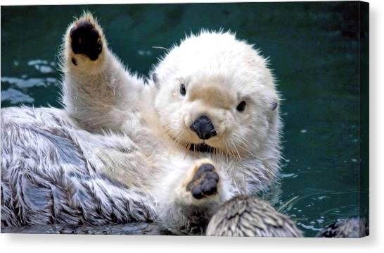 Otters Canvas Print - Seal by Mariel Mcmeeking