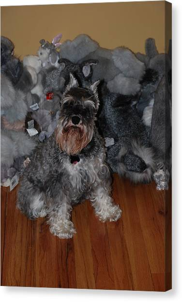 2d1ee596 Schnauzer Dog. Canvas Prints (Page #11 of 23) | Fine Art America