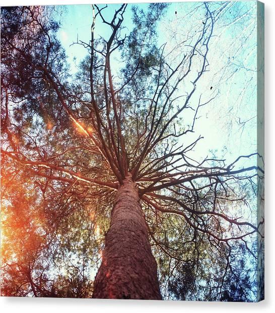 Grove Canvas Print - Trees In The Sky by Oleg Shagapov