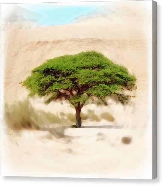 Negev Desert Canvas Print - Umbrella Thorn Acacia Acacia Tortilis, Negev Israel by Humourous Quotes