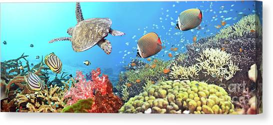 Angelfish Canvas Print - Underwater Panorama by MotHaiBaPhoto Prints