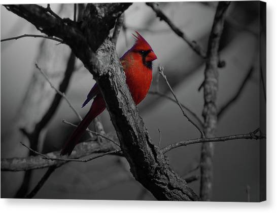 Woodpeckers Canvas Print - Bird by Mariel Mcmeeking