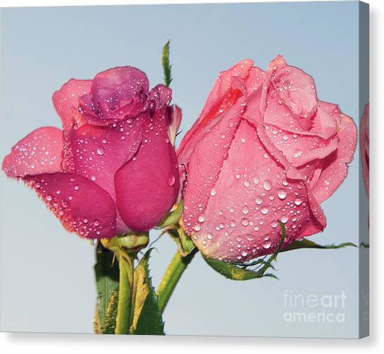 Two Roses Canvas Print