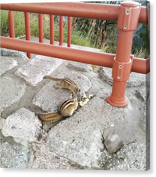 Rocky Mountains Canvas Print - Hungry Chipmunks by Jonathan Stoops