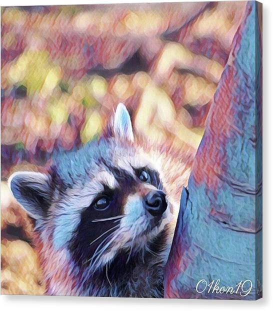 Raccoons Canvas Print - Instagram Photo by Kon Kon