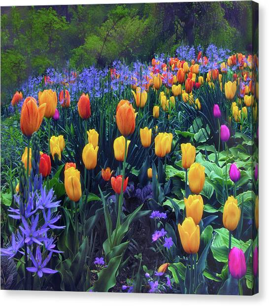 Procession Of Tulips Canvas Print
