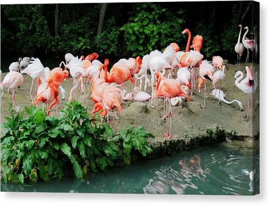 Flamingos Canvas Print - Bird by Mariel Mcmeeking
