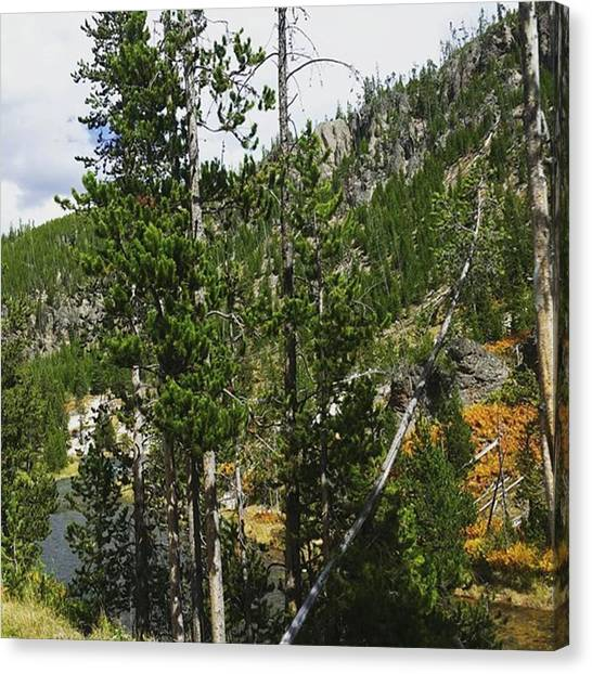 Rocky Mountains Canvas Print - Pine Tree Paradise by Jonathan Stoops