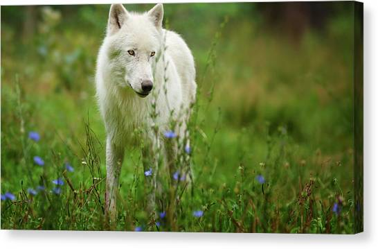 Horse Farms Canvas Print - Wolf by Mariel Mcmeeking