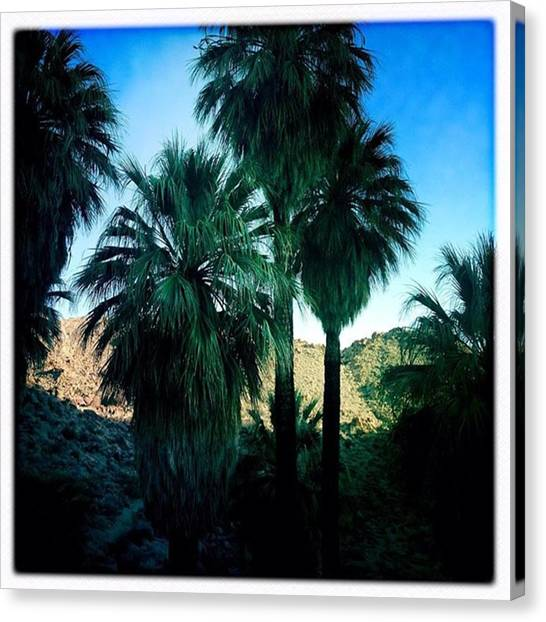 Famous Artists Canvas Print - 49 Palms Oasis. Have You Ever Been To by Alex Snay