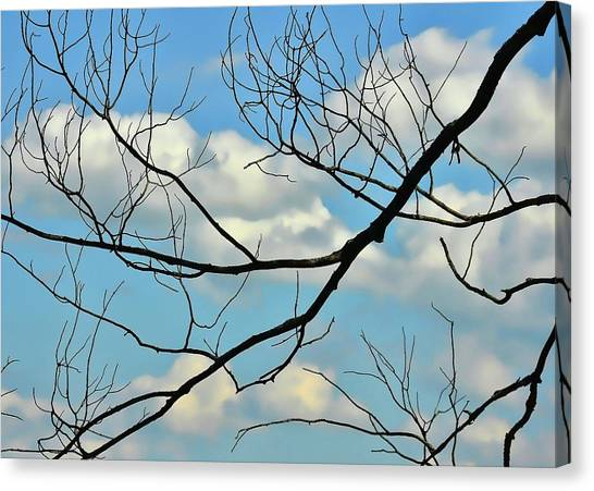 Bare Branches Canvas Print by JAMART Photography