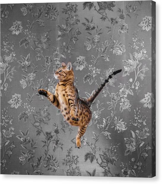 Bengal Cat Jumping Canvas Print