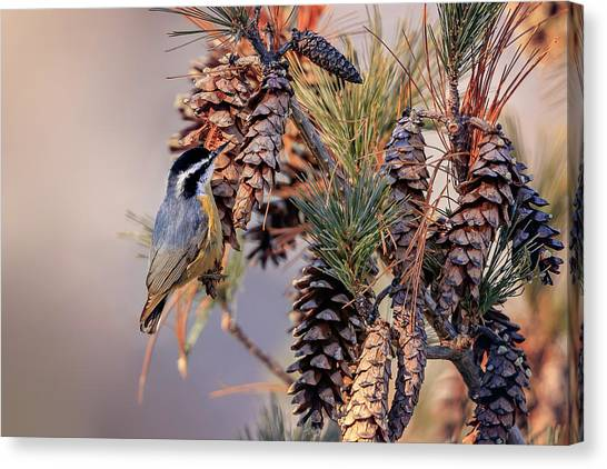 Canvas Print featuring the photograph Black-capped Chickadee by Peter Lakomy