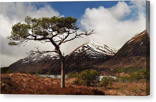Glen Affric Canvas Print