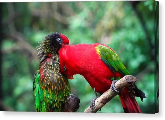 Macaws Canvas Print - Parrot by Jackie Russo