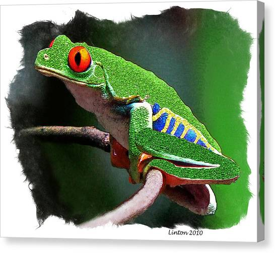 Rain Canvas Print - Red-eyed Leaf Frog by Larry Linton