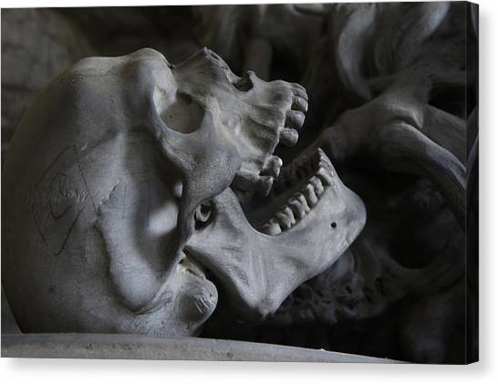 Triceratops Canvas Print - Skull by Jackie Russo