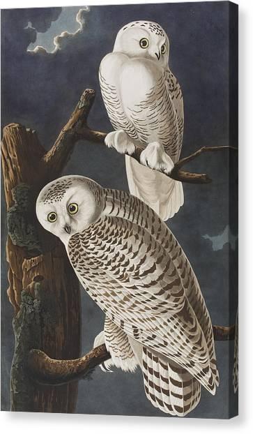 Owl Canvas Print - Snowy Owl by John James Audubon