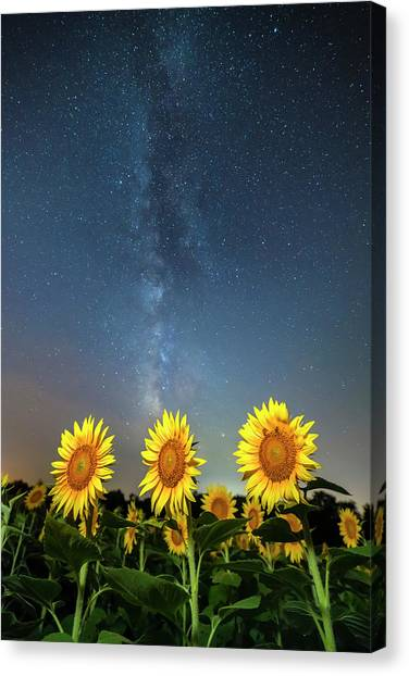 Sunflower Galaxy IIi Canvas Print
