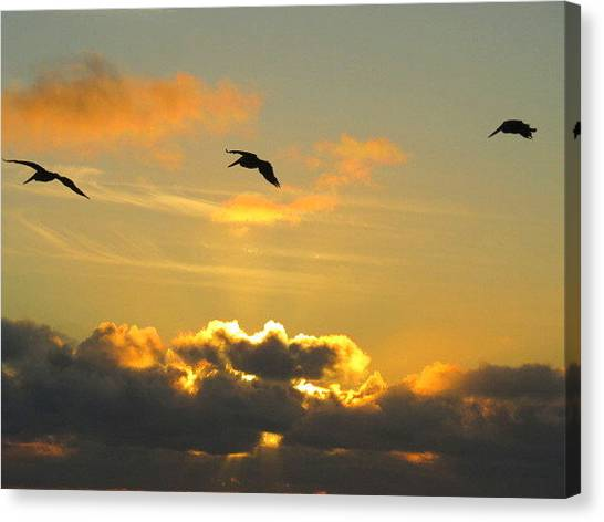 Large Birds Canvas Print - Sunset by Josias Tomas