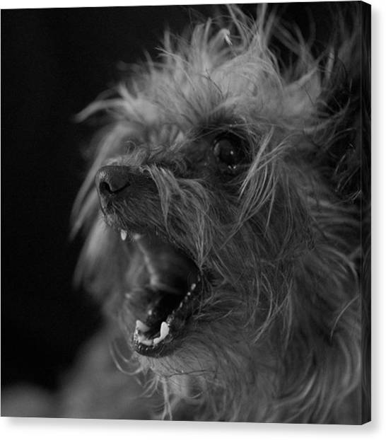 Head Canvas Print - The Dog Tongue Is Speaking. Listen by David Haskett II