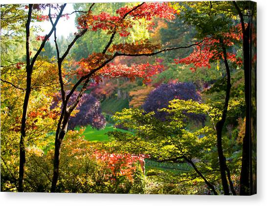 Vancouver Island Canvas Print - Trees In A Garden, Butchart Gardens by Panoramic Images