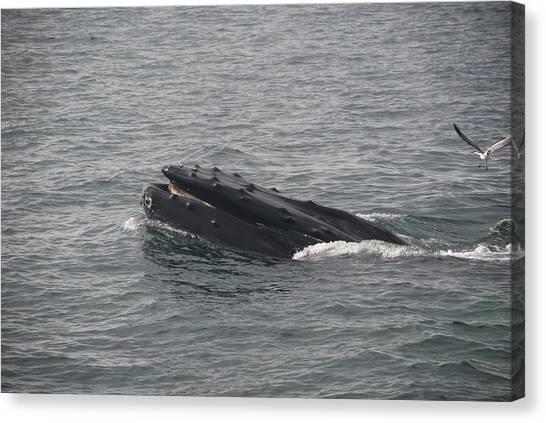 Submarine Canvas Print - Whale by Mariel Mcmeeking