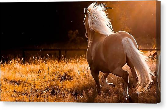 Horse Farms Canvas Print - Horse by Jackie Russo