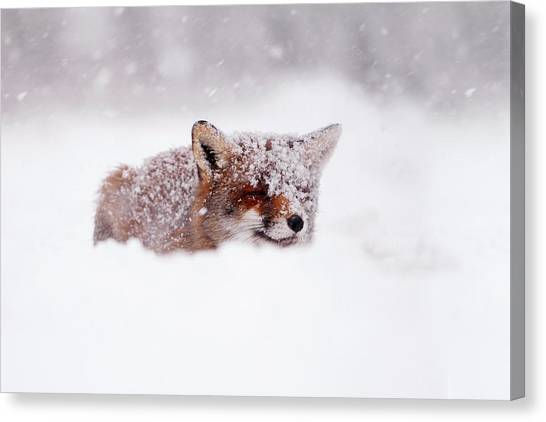 Foxes Canvas Print - 50 Shades Of White And A Touch Of Red by Roeselien Raimond