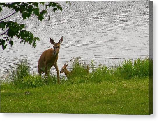 Kangaroo Canvas Print - Deer by Mariel Mcmeeking