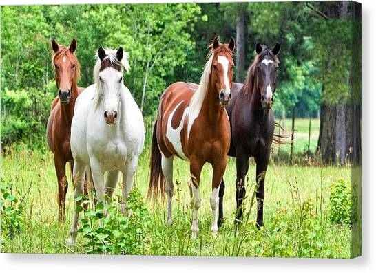 Horse Farms Canvas Print - Horse by Mariel Mcmeeking