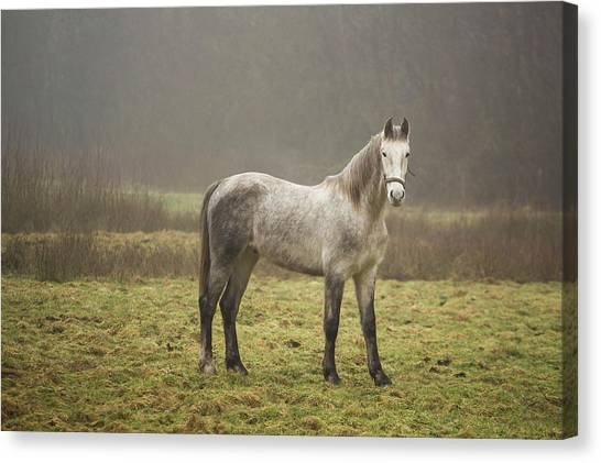 Farm Animals Canvas Print - Horse by Mariel Mcmeeking