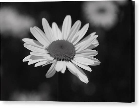 Flowers Canvas Print by Luke Robertson