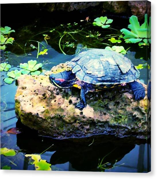 Tortoises Canvas Print - Time Taking by C Oeur
