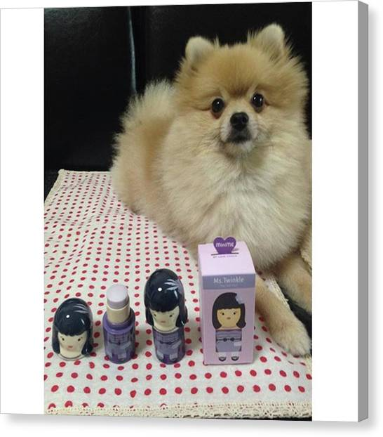Pomeranians Canvas Print - Instagram Photo by Masato Fukai