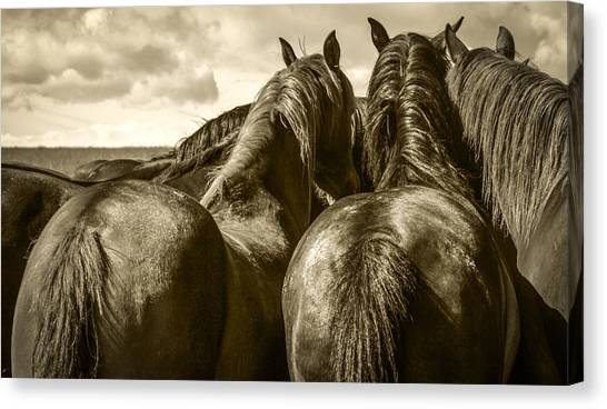 #5815 - Mortana Morgan Mares Canvas Print