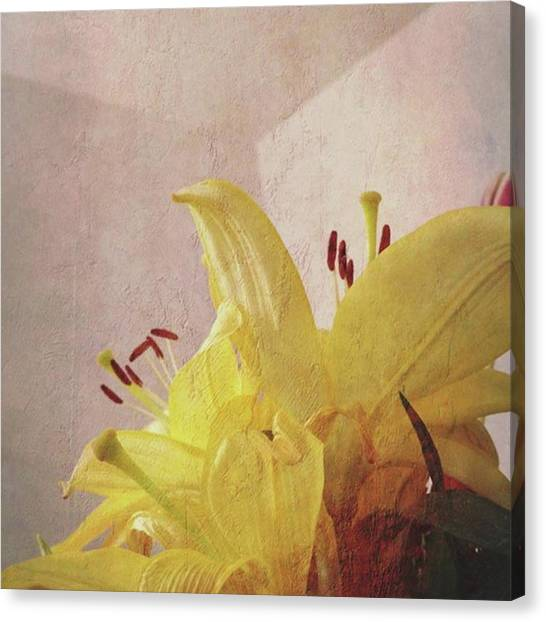 Orchids Canvas Print - Instagram Photo by Thirsty Orchid