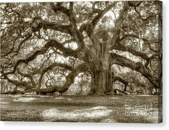 Spanish Canvas Print - Angel Oak Live Oak Tree by Dustin K Ryan