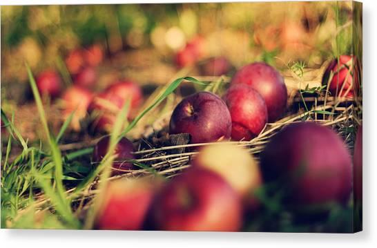 Apple Tree Canvas Print - Apple by Mariel Mcmeeking