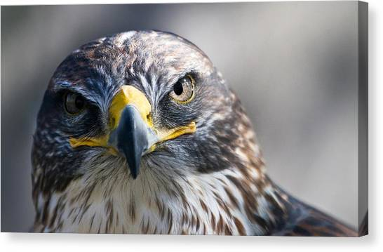 Hawks Canvas Print - Eagle by Jackie Russo